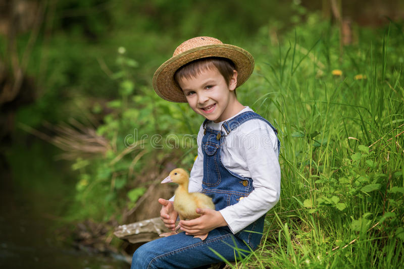 Sweet child, playing on little river with ducklings. Preschool child, boy, playing on little river with ducklings, letting the duckling swimming for the first royalty free stock photography