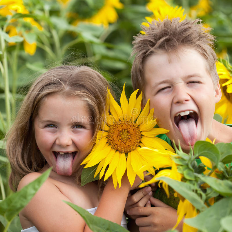 Free Sweet Children In Sunflower Field Stock Images - 21563884