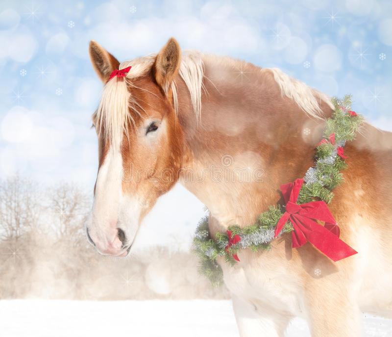 Sweet Christmas Themed Image Of A Draft Horse Royalty Free Stock Photography