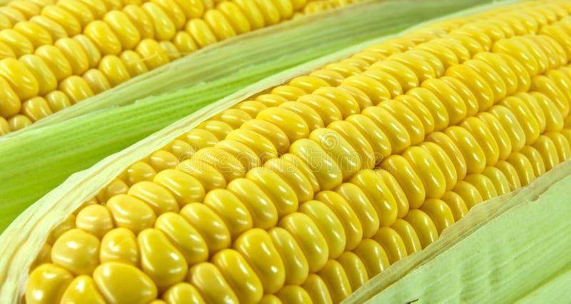 Sweet corn. A close up sweet corn royalty free stock photos