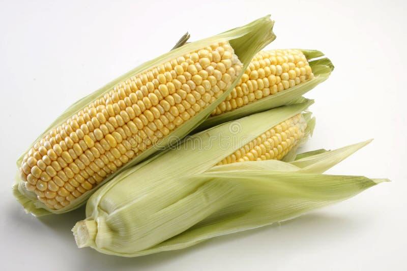 Sweet corn royalty free stock image