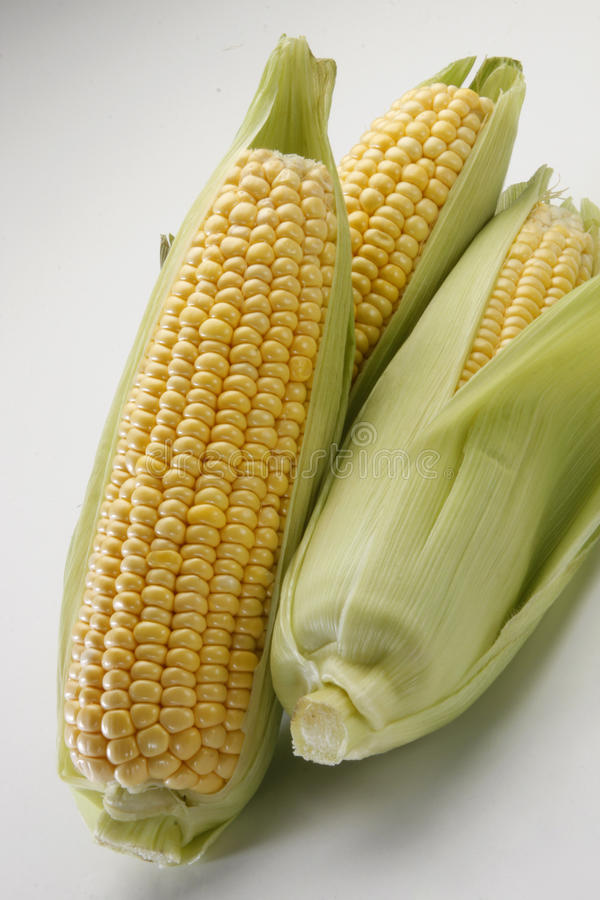 Download Sweet Corn Stock Images - Image: 25291844