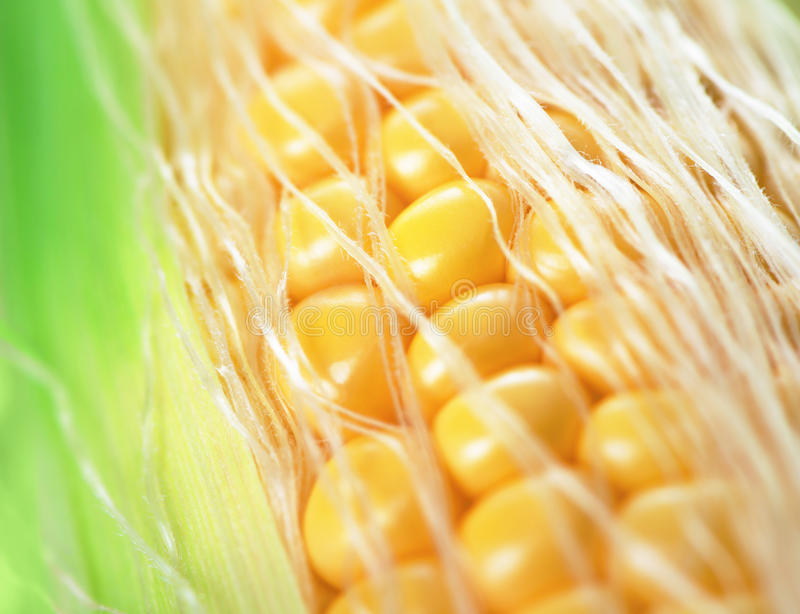 Sweet corn. Close up of sweet corn royalty free stock images