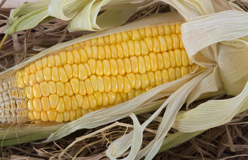 Sweet corn on the cob royalty free stock image