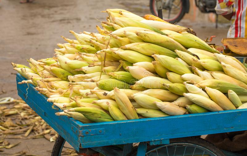 Sweet Corn. Fresh corn on cobs on wooden table, closeup, top view royalty free stock photo