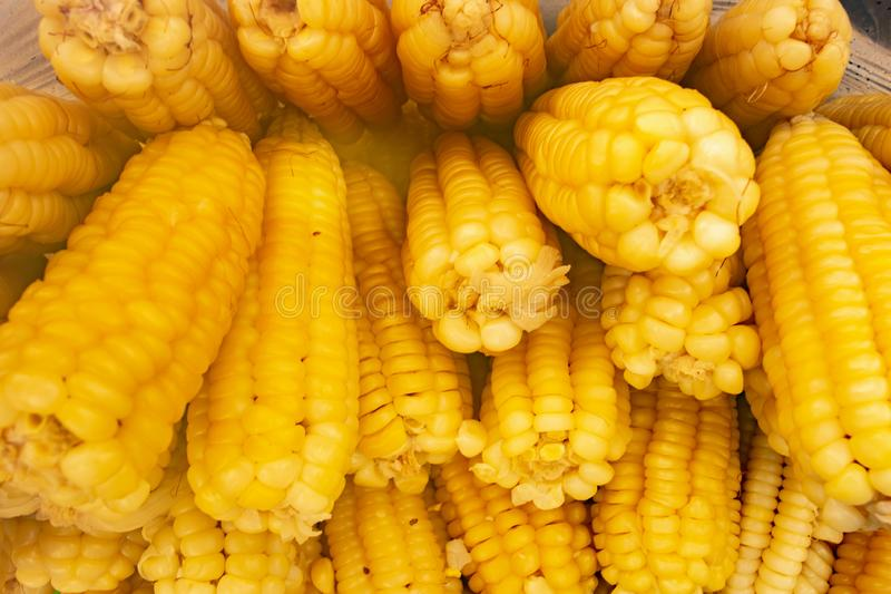 SWEET CORN GROUP royalty free stock photography