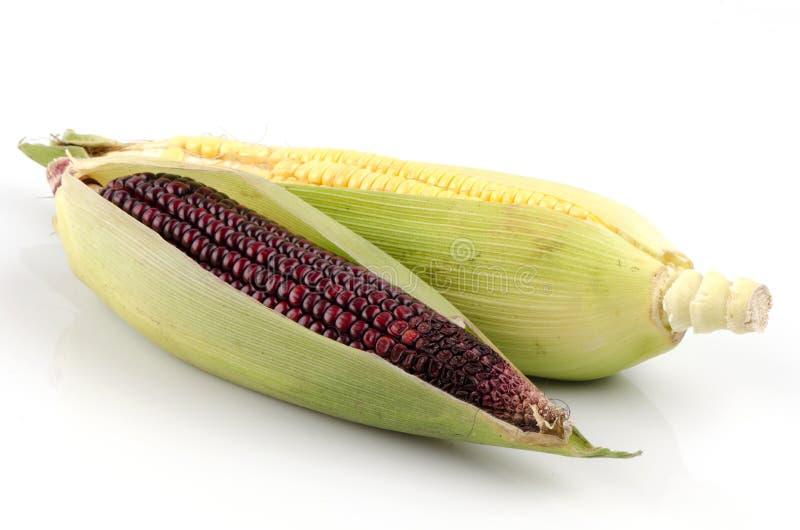Sweet corn (Zea mays L.) and Maiz morado (flour corn, Zea mays amylacea) stock photo