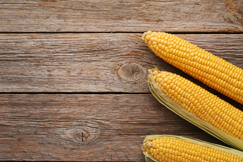 Sweet corns royalty free stock images