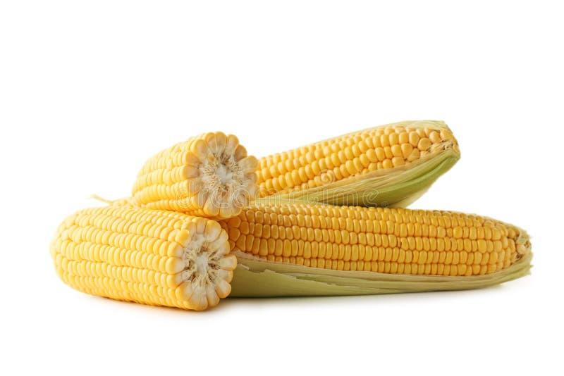 Sweet corns stock image