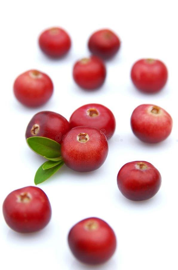 Sweet cranberry stock image