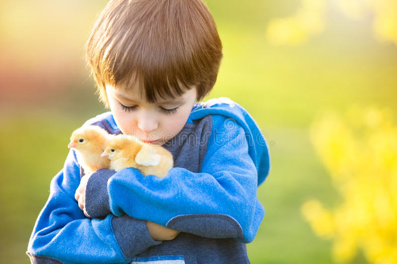 Sweet cute child, preschool boy, playing with little newborn chi royalty free stock images