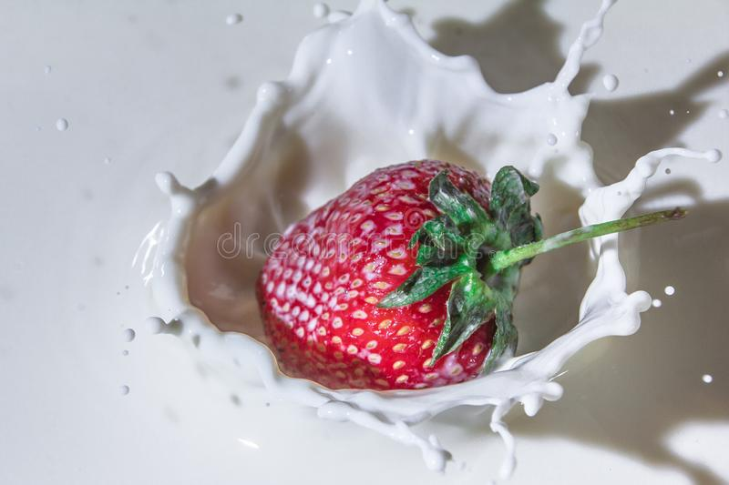 Delicious strawberries in cream. Sweet and delicious still life. Subject photo. advertising photography. strawberries and milk. red on white. frozen movement royalty free stock image