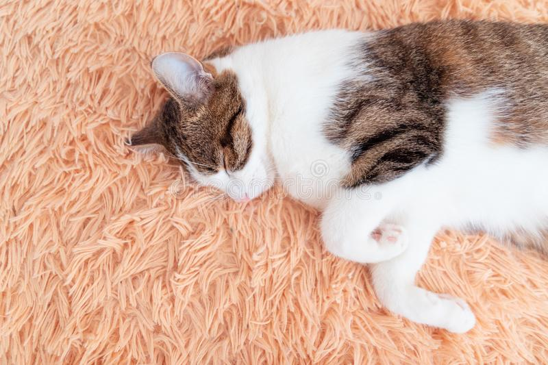 A young cat sleeping on a couch at home royalty free stock photos