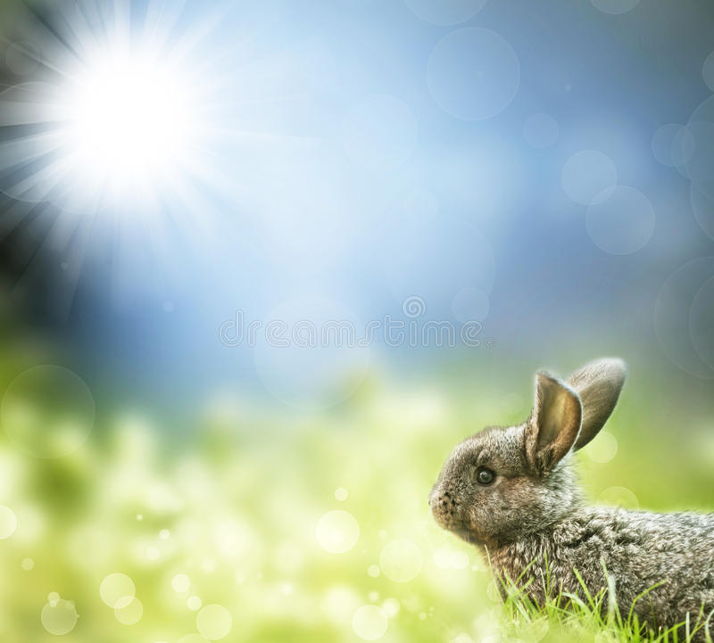 Sweet Easter Bunny In The Spring Meadow Stock Image