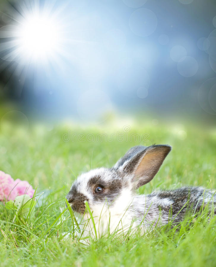 Download Sweet Easter Bunny In The Spring Meadow Stock Image - Image: 38493795
