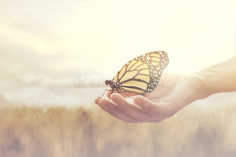 Sweet encounter between a human hand and a butterfly. Sweet moment between a human hand and a butterfly stock photos