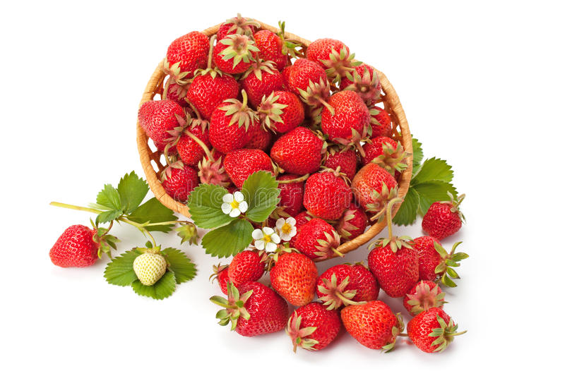 Sweet, fragrant strawberries in a wicker basket. Isolated on white background stock images