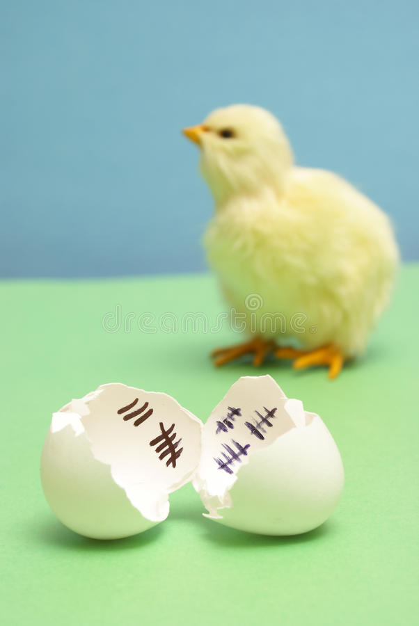 Sweet Freedom. A chick has been counting the days to his release as a hatchling stock images