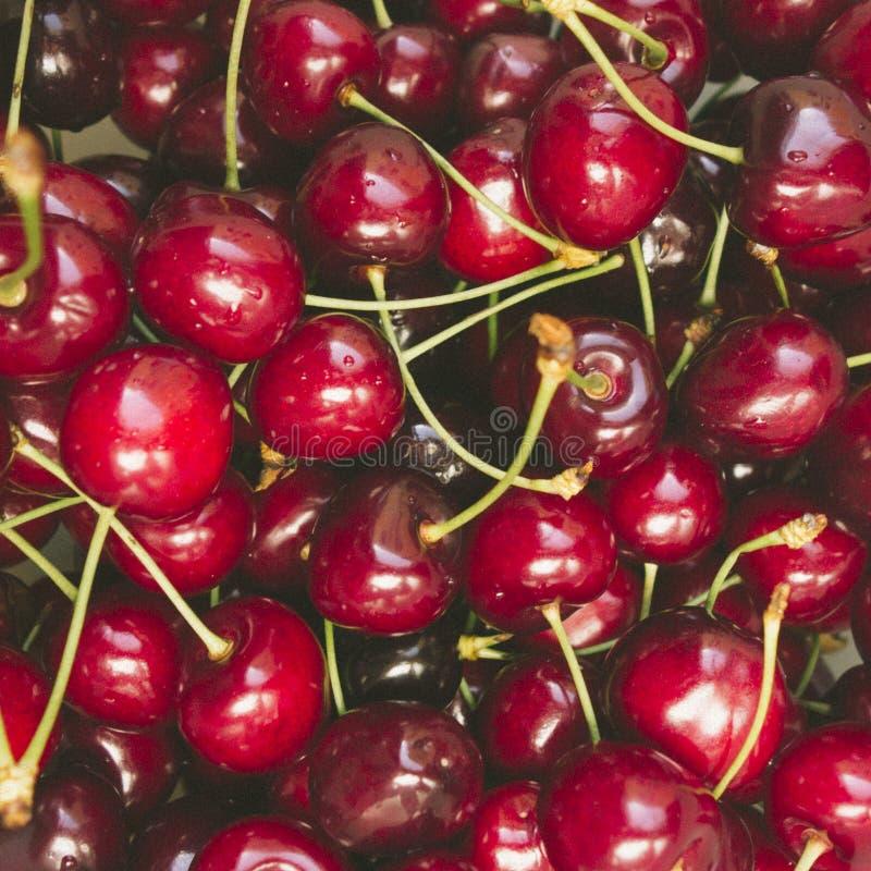 Sweet fresh cherries in film style royalty free stock photo