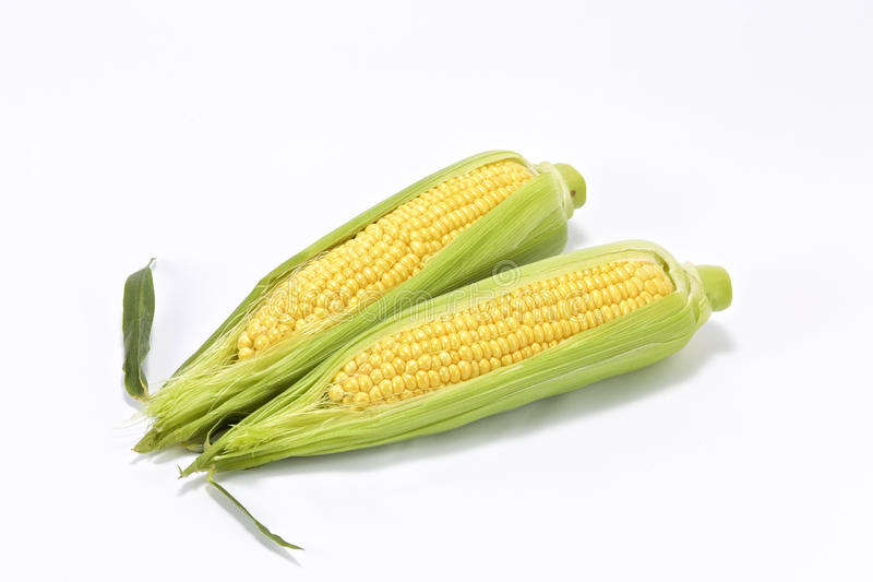 Sweet fresh corn royalty free stock images
