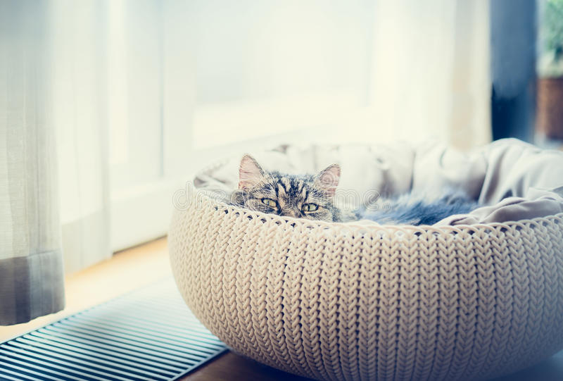 Sweet funny cat in cats basket over window background. The cat looking predatory at camera stock photography