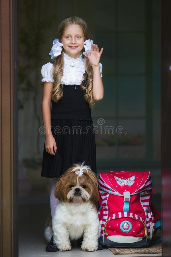 Sweet girl with white bows in a school uniform with a cute little dog. Back to school. Sweet girl with white bows in a school uniform with a cute little dog stock image