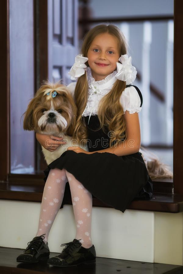 Sweet girl with white bows in a school uniform with a cute little dog. Back to school. Sweet girl with white bows in a school uniform with a cute little dog royalty free stock image