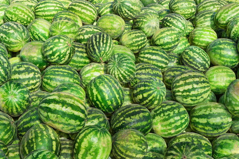 Sweet green watermelons stock photo