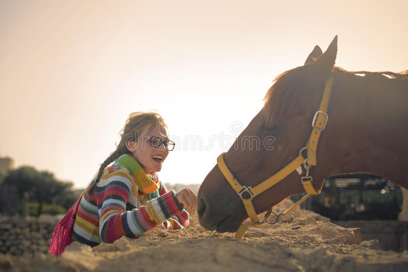 Sweet horse royalty free stock photography