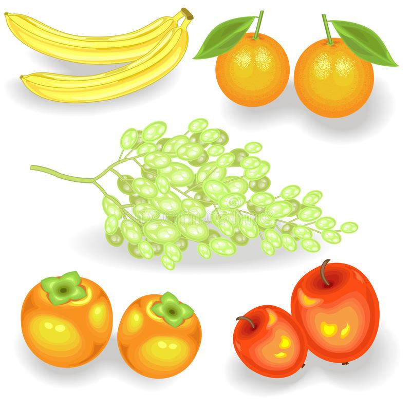 Sweet juicy fruit for every taste. Fresh bananas, persimmons, oranges, apples, grapes. The source of vitamins and trace elements. Vector illustration royalty free illustration