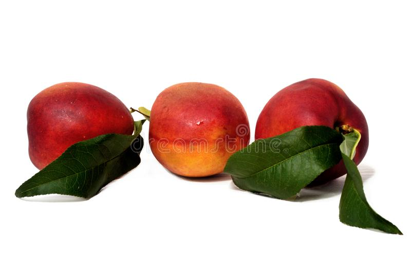 Sweet juicy nectarines isolated stock photography