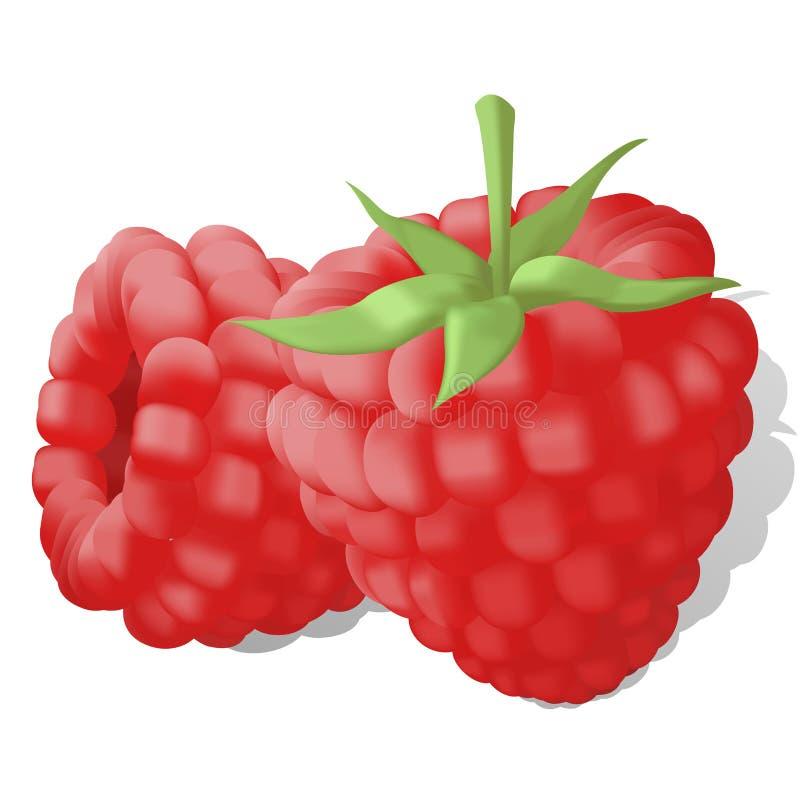 Sweet juicy ripe raspberries stock illustration