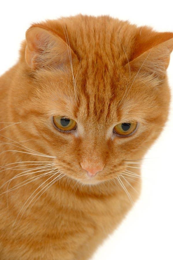 Free Sweet Kitten Stock Images - 2342244