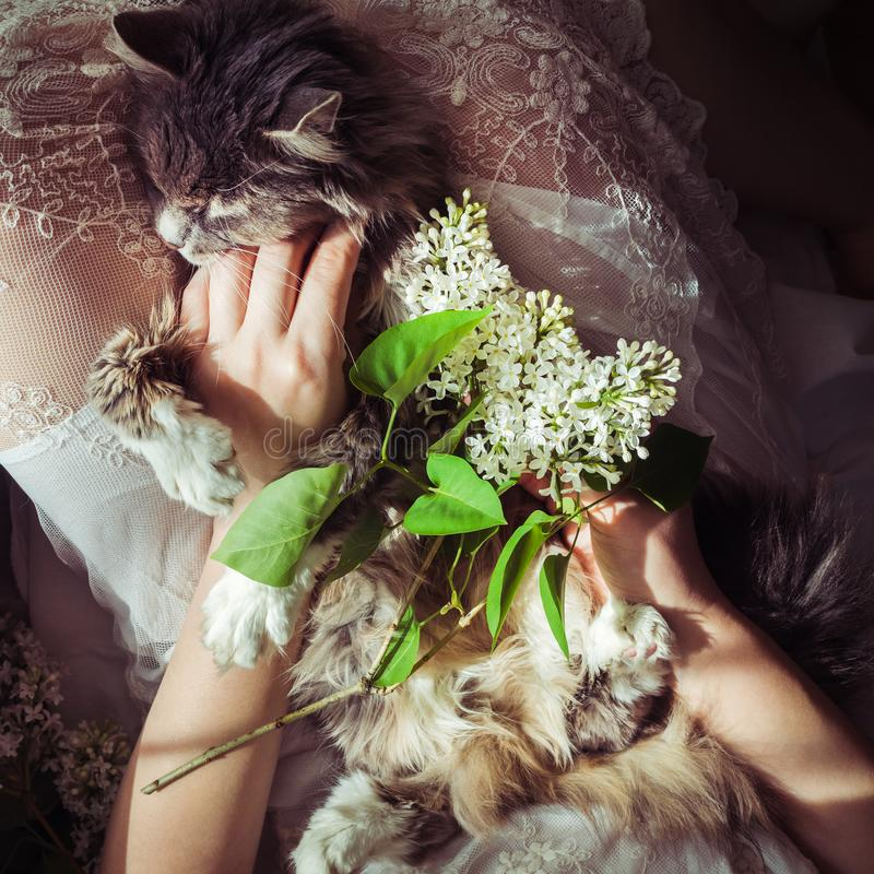 Sweet kitten and beautiful sprig of lilac. Sweet, lovable kitten, beautiful sprig of lilac, female legs and white lace dress. Top view, close-up. Care for Pets stock photos
