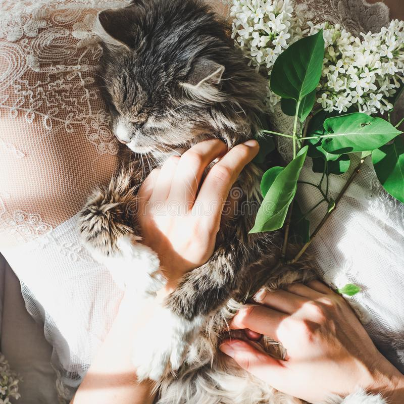 Sweet kitten and beautiful sprig of lilac. Sweet, lovable kitten, beautiful sprig of lilac, female legs and white lace dress. Top view, close-up. Care for Pets royalty free stock photo