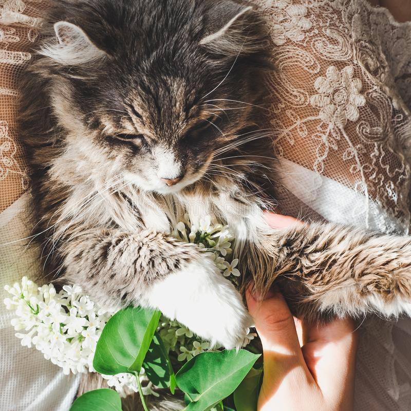 Sweet kitten and beautiful sprig of lilac. Sweet, lovable kitten, beautiful sprig of lilac, female legs and white lace dress. Top view, close-up. Care for Pets royalty free stock photos