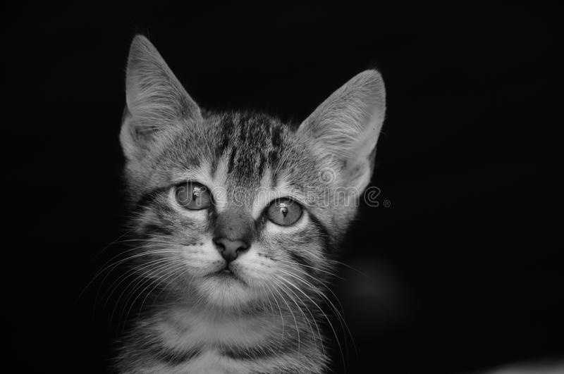 Sweet kitten royalty free stock photo