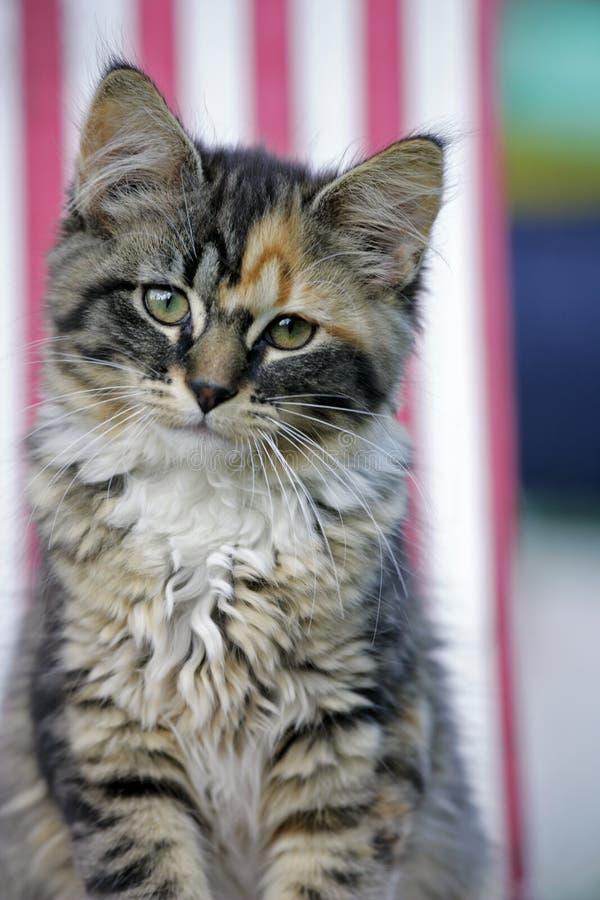 Sweet Kitten stock photo