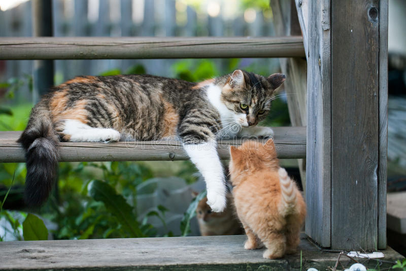 Sweet little kittens on the steps. Sweet little kittens in the backyard on the steps royalty free stock photo