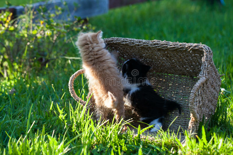 Sweet little orange and black and white kittens. In the backyard royalty free stock image