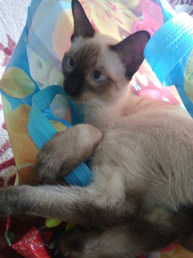 Sweet little pet kitten Beba stock photos
