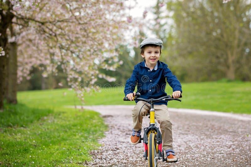 Sweet little preschool children, riding a bike in a cherry blossom garden. Springtime stock photo