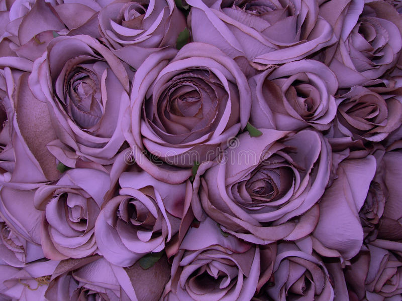 Sweet love. Rose bacground, fragment of huge bouquet royalty free stock photo