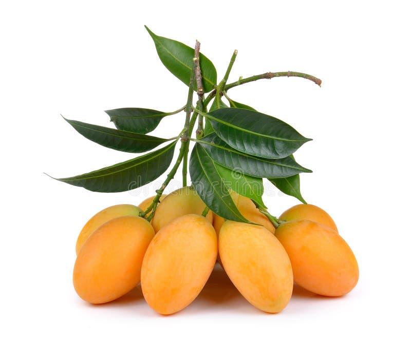 Sweet marian plum thai fruit isolated on white backgroun. Sweet marian plum thai fruit isolated on a white backgroun royalty free stock photo