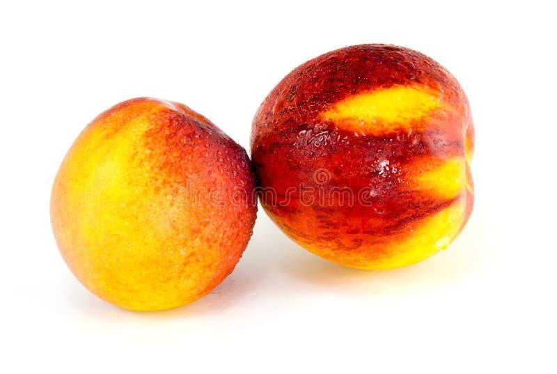 Sweet Nectarine. On isolated white background royalty free stock image