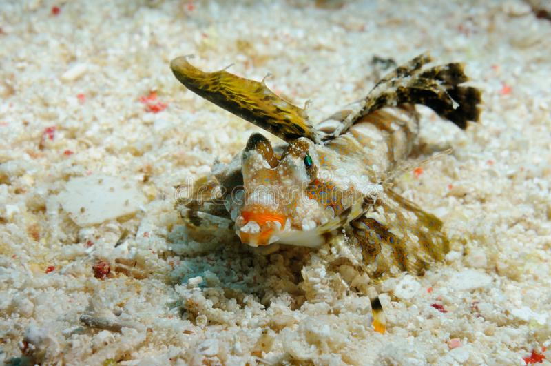 Sweet orange lips underwater royalty free stock photography