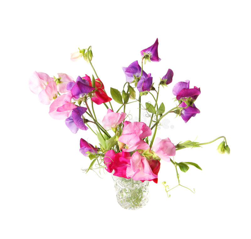 Download Sweet pea stock image. Image of cutout, bouquet, floral - 22369041