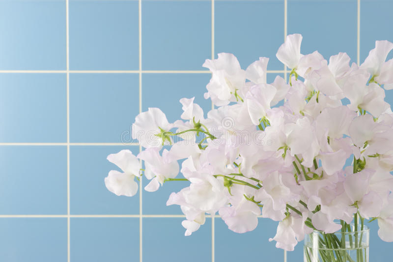 Download Sweet pea stock image. Image of highly, leguminosae, scent - 24845769