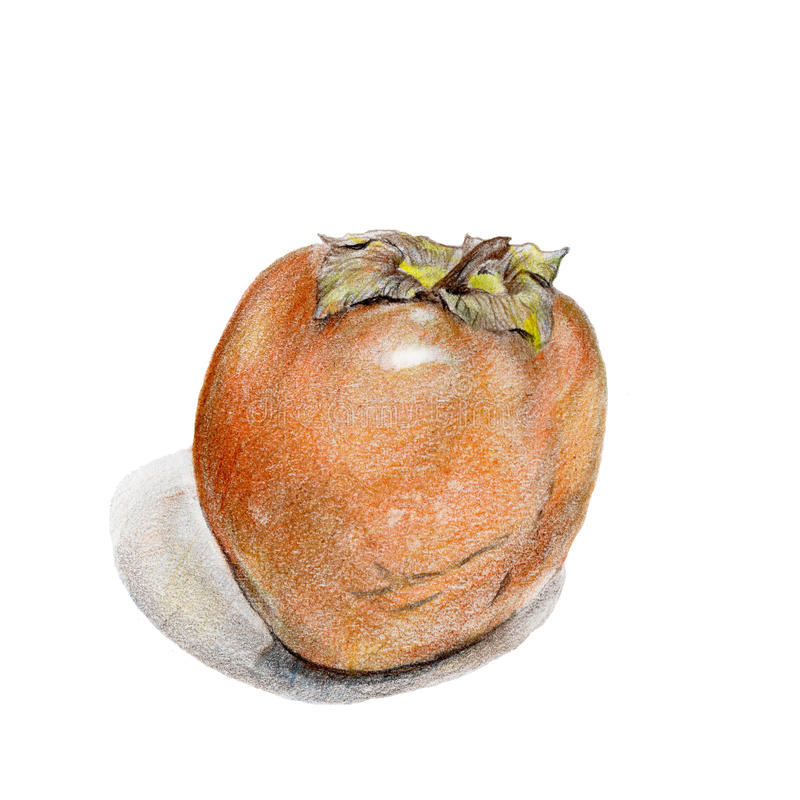 Sweet persimmon by colored pencils on white backgr stock photography
