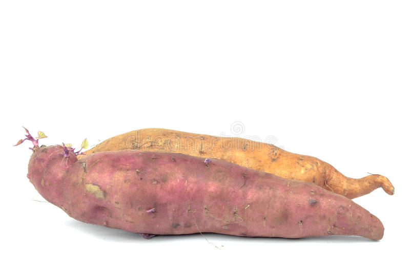 The sweet potato - batat. The sweet potato (Ipomoea batatas) or batat. Purple and yellow batats on white. Biological farming stock images
